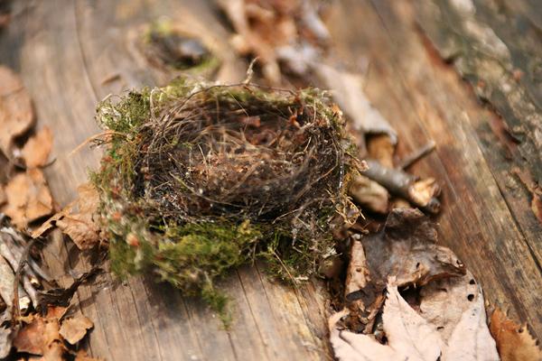 有明の滝 散策路 鳥の巣