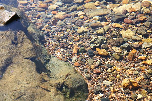 支笏湖 水中 小魚 エビ