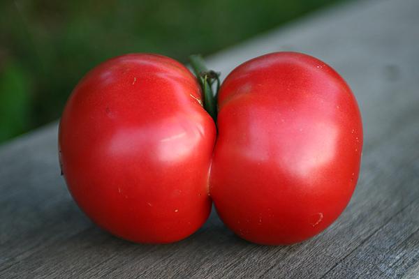 お尻トマト エッチな野菜