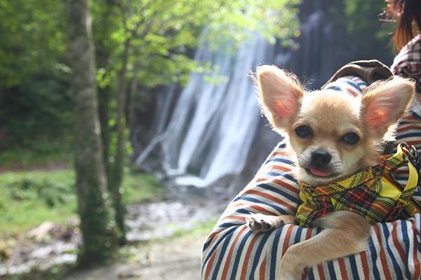 すずらん丘陵 茶太郎 鱒見の滝
