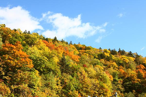 定山渓レイクライン 紅葉 さっぽろ湖