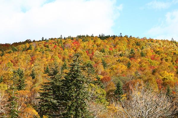 定山渓レイクライン 紅葉