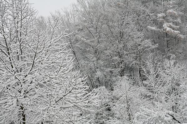 大雪 小鳥の村