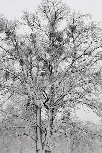大雪 真駒内公園 茶太郎