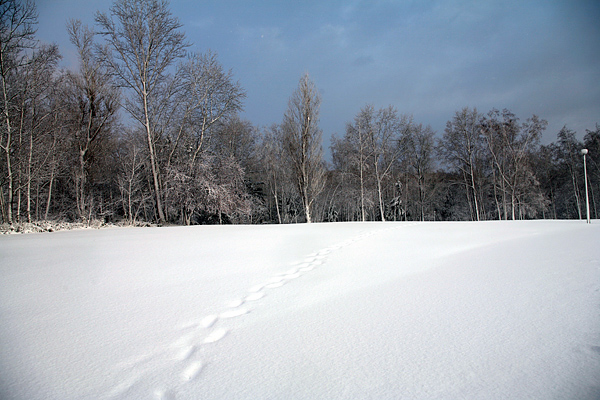 真駒内公園 大雪 茶太郎