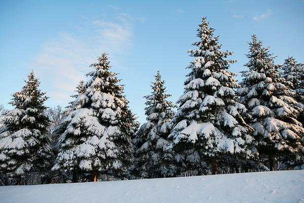 真駒内公園 雪景色 茶太郎 夕日