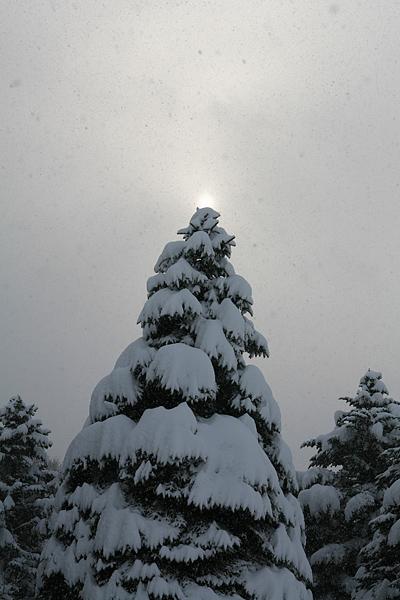 真駒内公園 松 クリスマスツリー 太陽