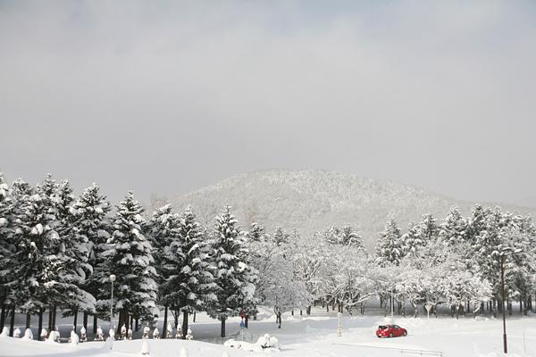 真駒内公園 雪 藻岩山
