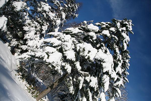 真駒内公園 雪 晴天