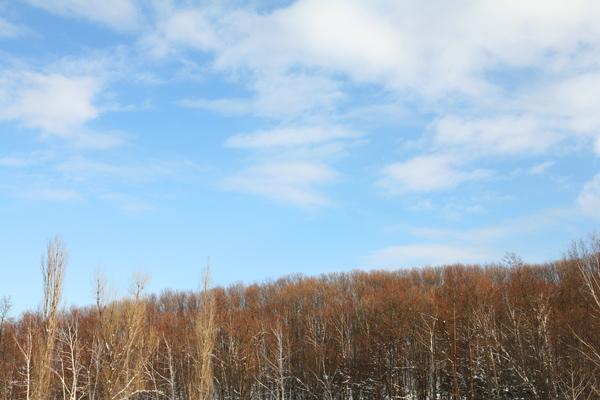 芽吹きの木々 青い空