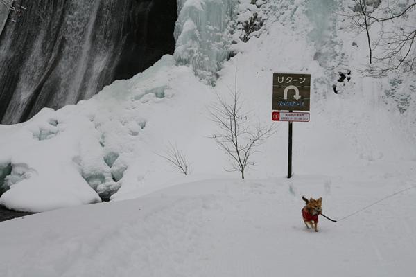 鱒見の滝 氷瀑 Uターン 茶太郎