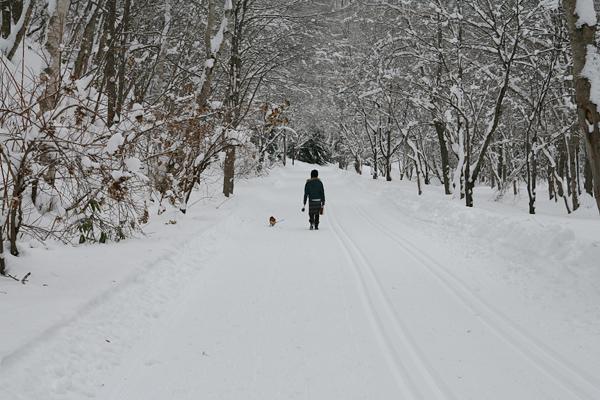 すずらん丘陵 冬 ウォーキング