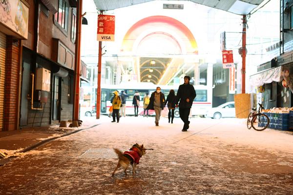 第64回さっぽろ雪まつり たぬき小路 茶太郎