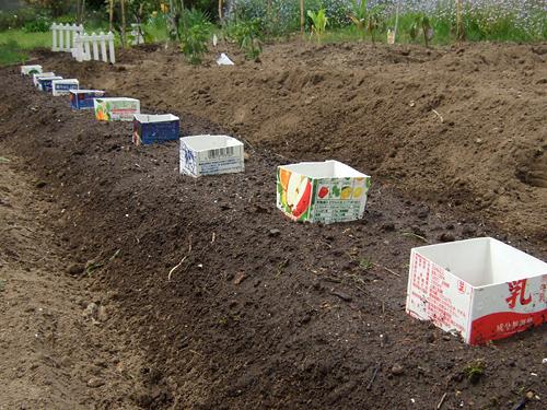 枝豆 植え付け