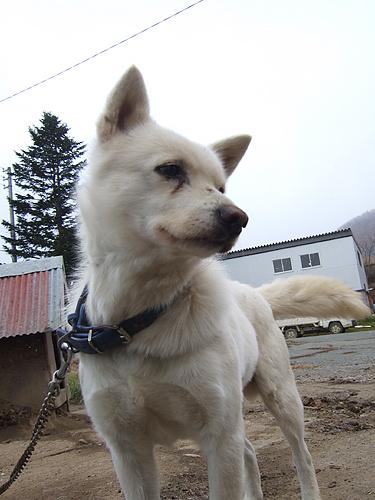 八剣山果樹園 太郎 登山犬
