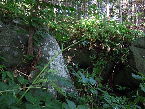 ポロノット森林公園 岩