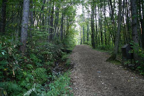 富良野 森の時計 坂道