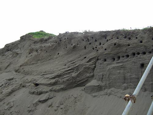 小樽 ドリームビーチ 海ツバメの巣