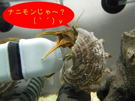 コブヨコ捜査官