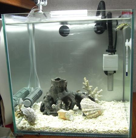 5ヶ月目の水槽