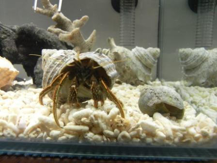 来た時の貝と比較