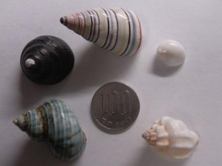 貝殻(早乙女がい他)表