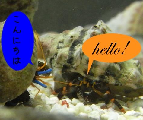 こんにちはとhello!