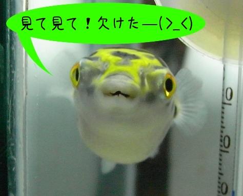 歯欠け正面