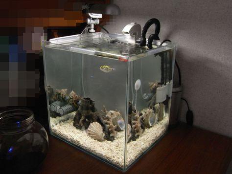 綺麗なフグ水槽