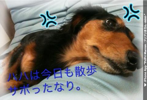 IMG_3009.jpg