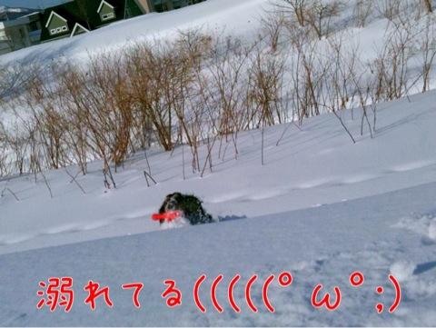 IMG_8447.jpg