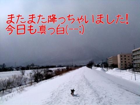 IMG_9915.jpg