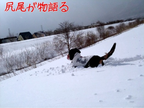 IMG_9917.jpg