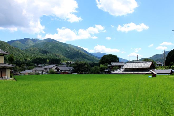s10-ohara0277.jpg