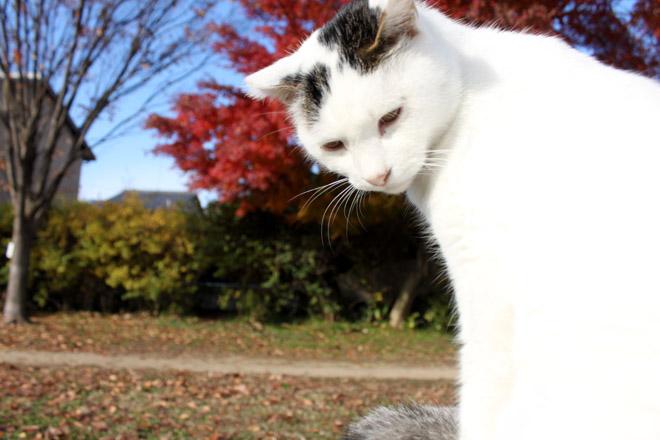 s10-shiro-a2010.jpg