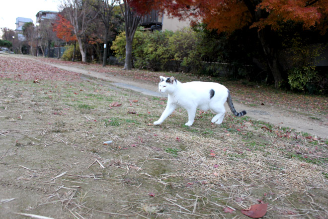 s10-shiro-a3068.jpg