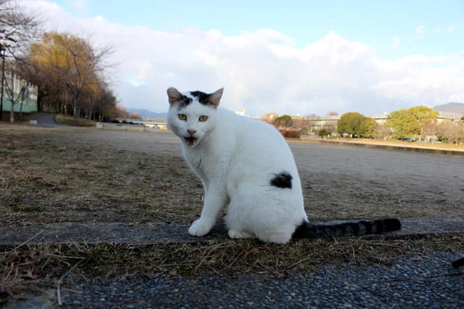 s10-shiro-a5905.jpg