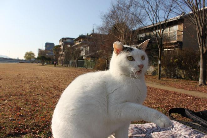 s10-shiro-a6092.jpg