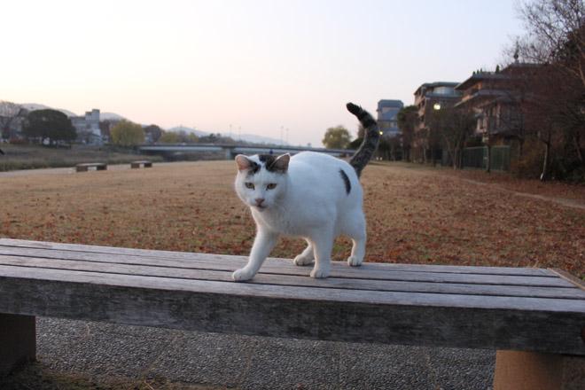 s10-shiro-a6616.jpg