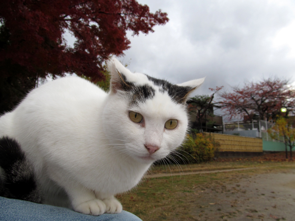 s10-shiro-s0006.jpg