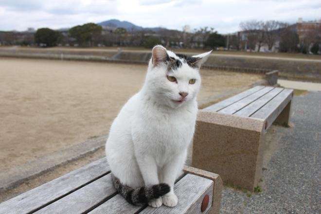 s10-shiro3466.jpg