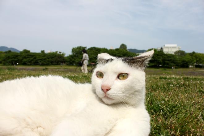 s10-shiro3684.jpg