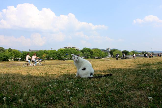 s10-shiro4861.jpg
