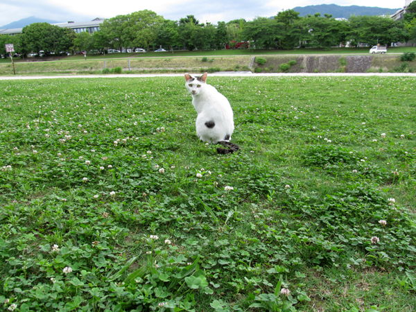 s10-shiro6474.jpg