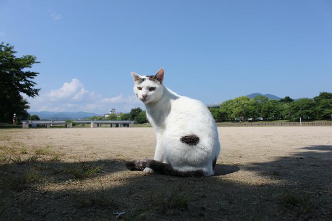 s10-shiro7268.jpg