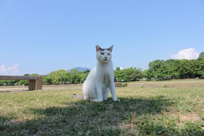 s10-shiro7276.jpg