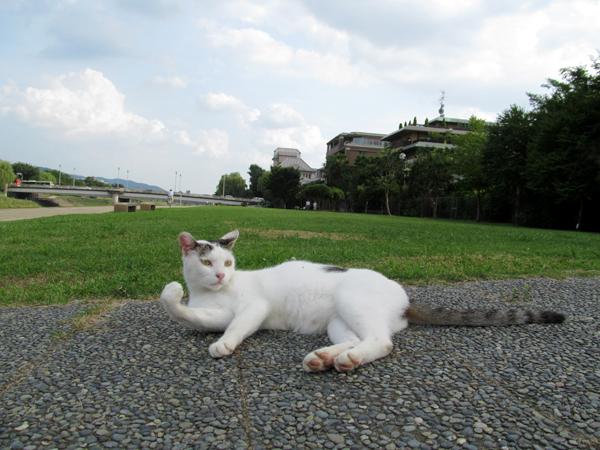 s10-shiro7775.jpg