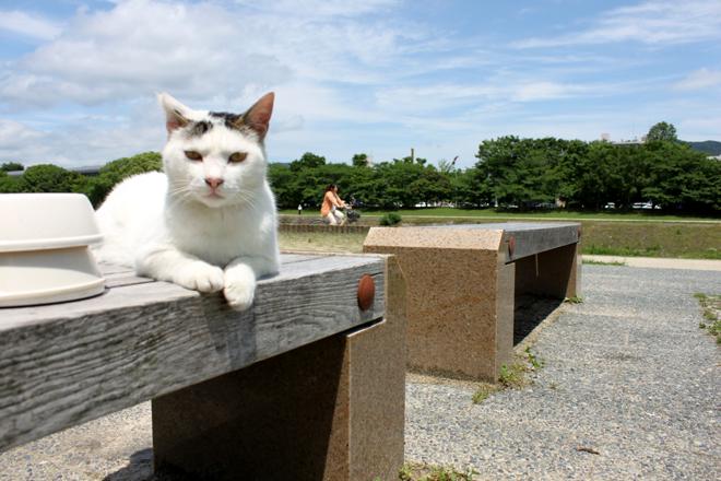 s10-shiro8104.jpg