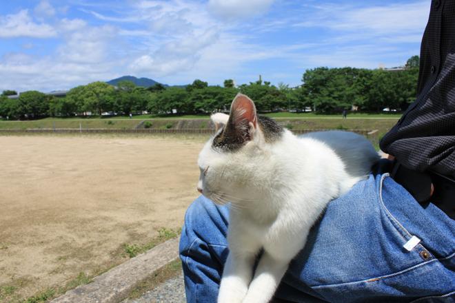 s10-shiro8122.jpg