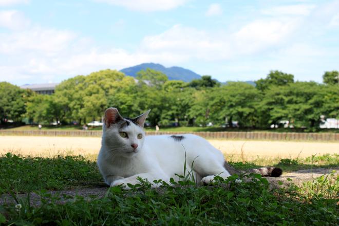 s10-shiro8141.jpg